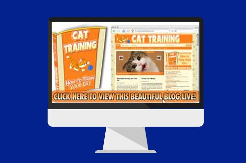 cat training blog
